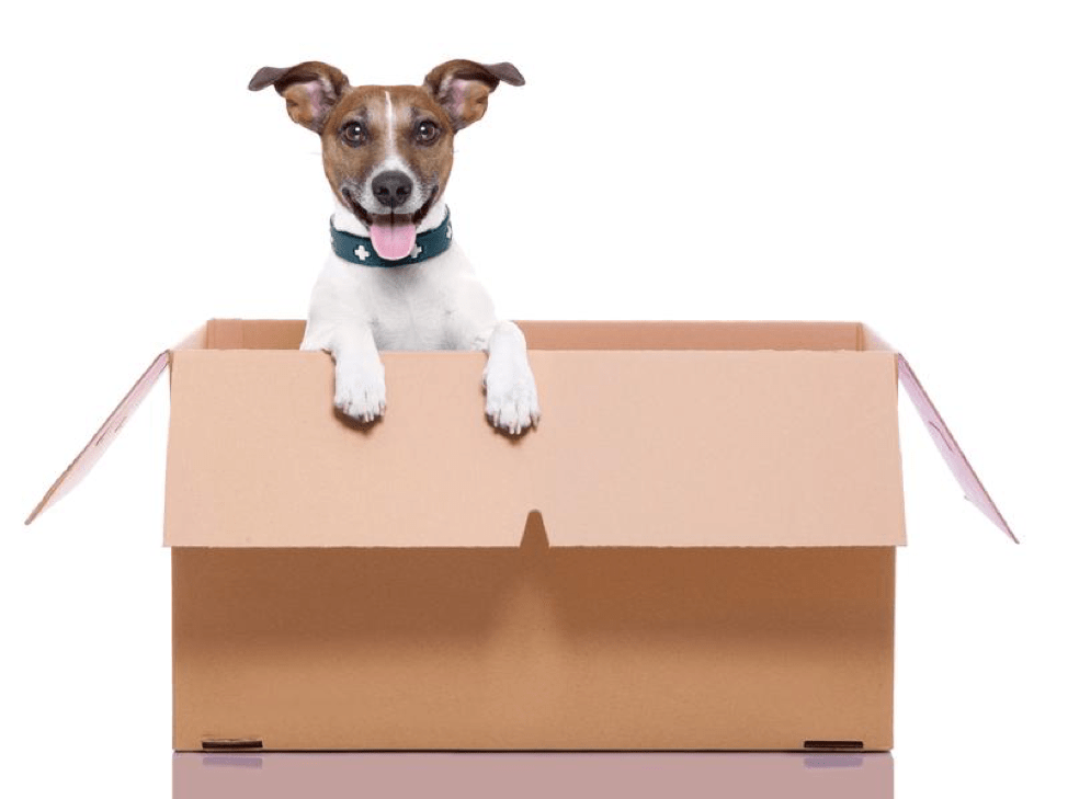 dog in moving box tips for moving