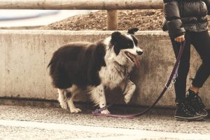 A Guide to The Best Dog Leashes