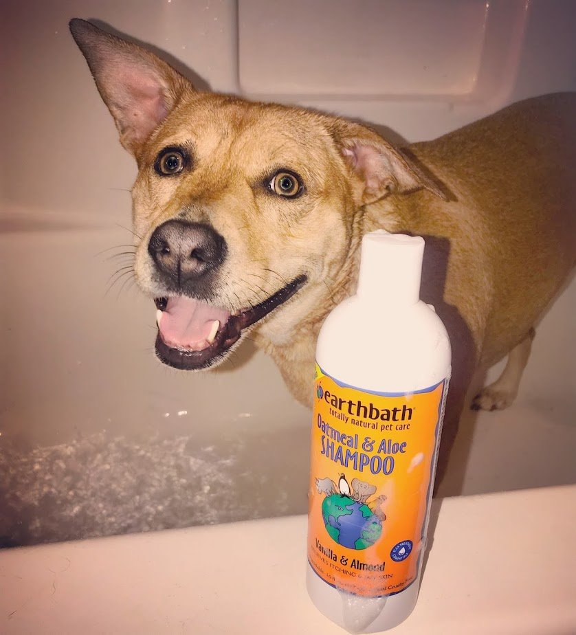 Roxy Dog Shampoo  - How to Minimize Dog Shedding
