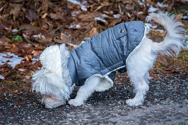 Dog with Jacket  - Entertaining Backyard Games To Play With Your Dog