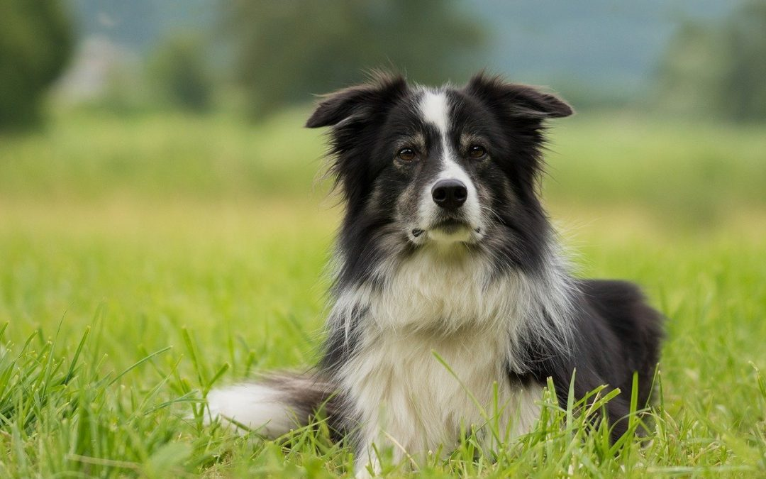 Awesome Ways To Minimize Dog Shedding and Keep A Home Clean
