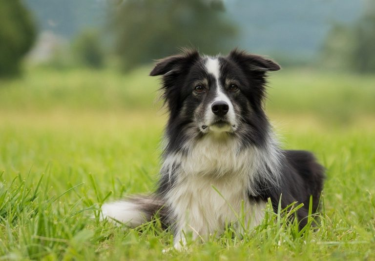 How To Minimize Dog Shedding and Keep A Home Clean