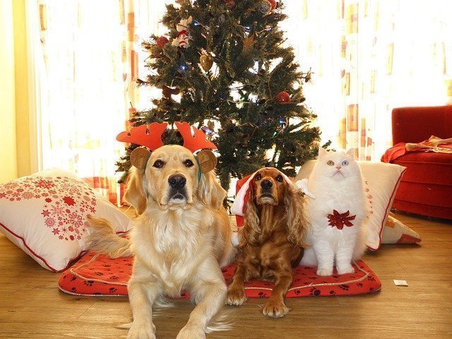 It's the most wonderful time of the year! Whether they're naughty or nice, make the holidays special for your dog. Here's the best Christmas gifts for dogs!