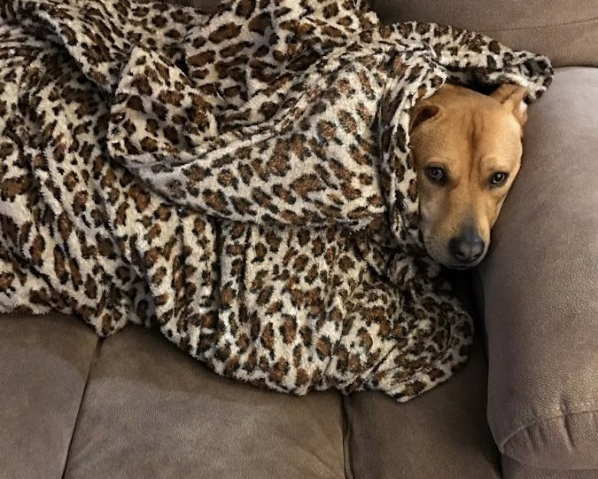 Roxy with Dog Blanket Snuggie