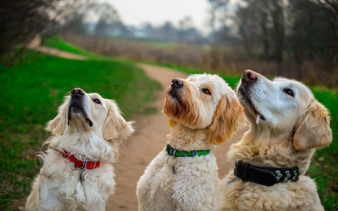 Super Quick & Easy Dog Treat Recipes They'll Adore!