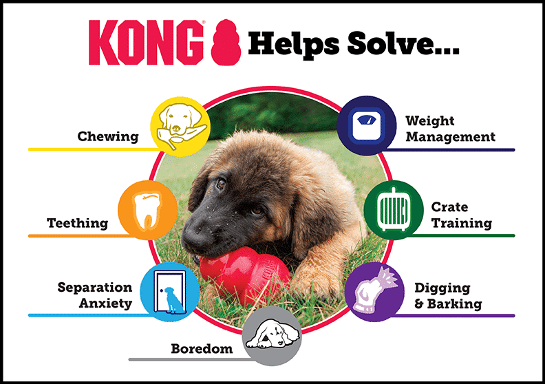 Dog with Kong - 46+ Yummy & Healthy Snacks To Fill Your Dog's Kong!