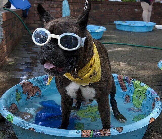 cool dog in pool