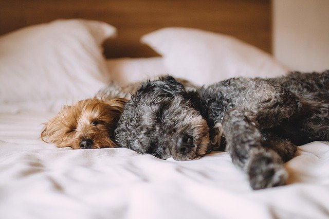 Dogs Taking Naps - Keep Dog Active During Social Distancing