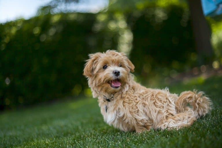 active dog while quarantined