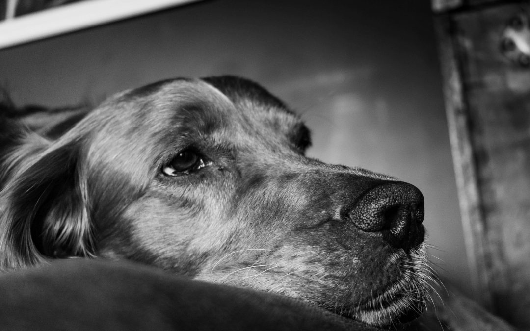 What You Must Know About Xylitol Poisoning & Dogs