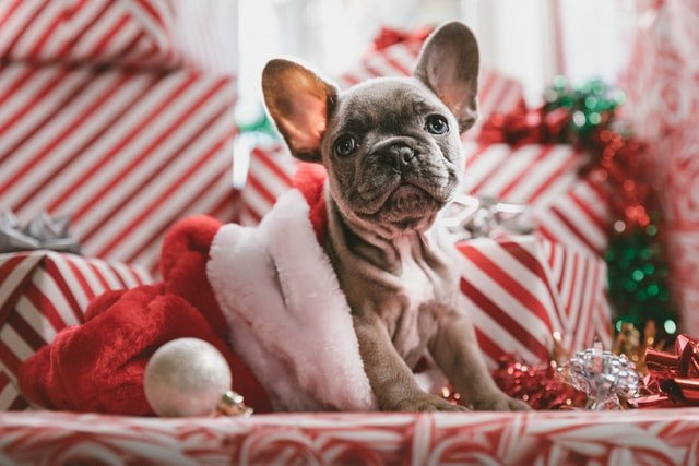 best christmas presents for dogs