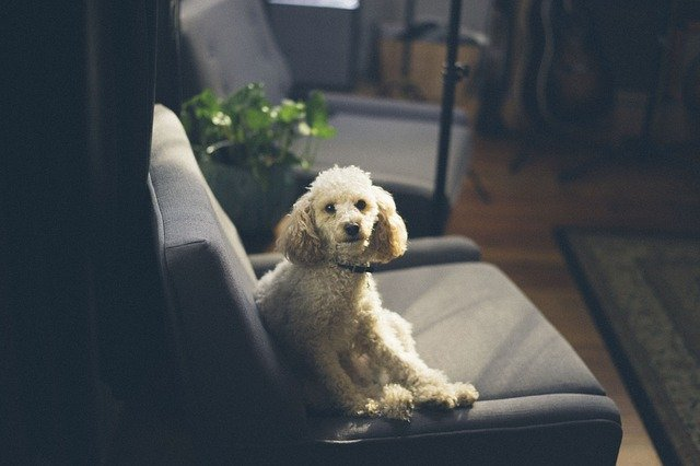 4 Simple Steps to Creating a Room for Your Dog