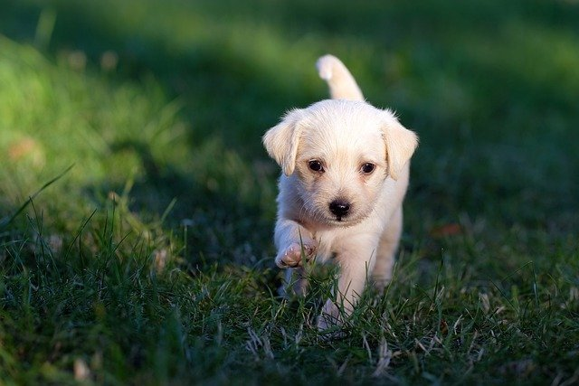 The Best Ways To Calm An Excitable Puppy