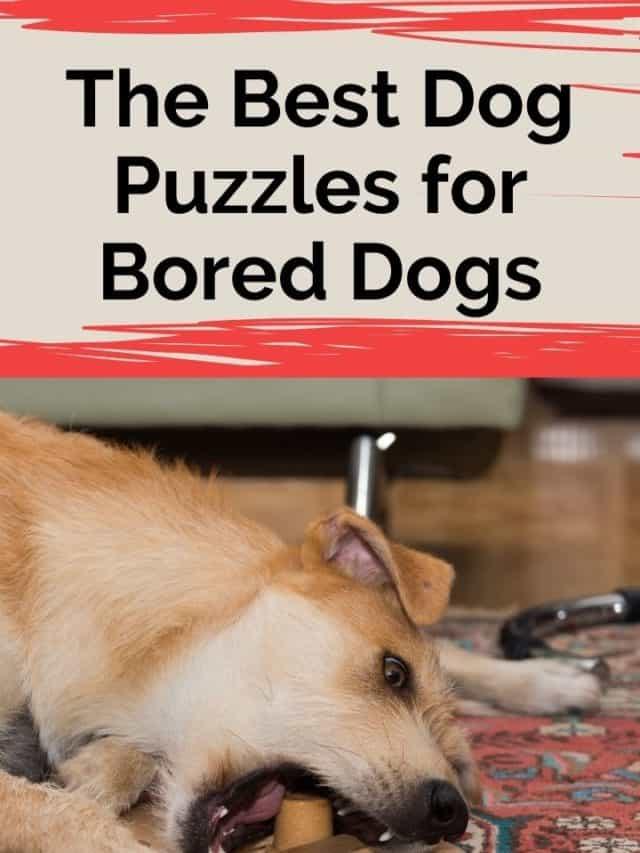 Best Dog Puzzles