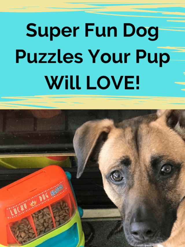 Super Fun Dog Puzzles They'll LOVE!