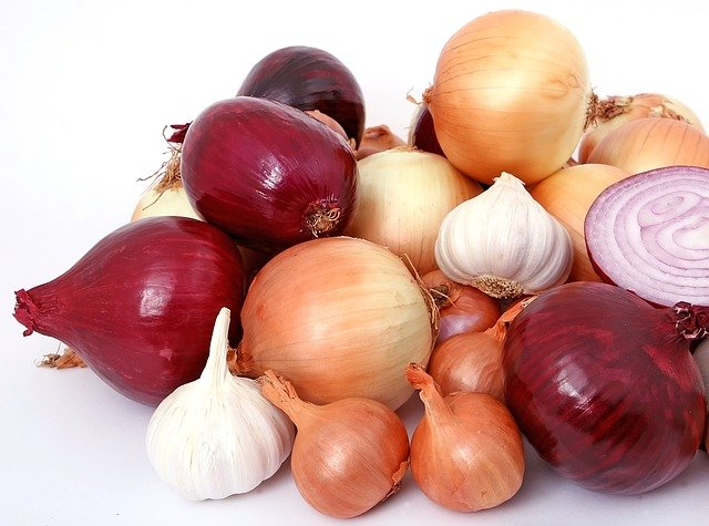 onions bad for dogs
