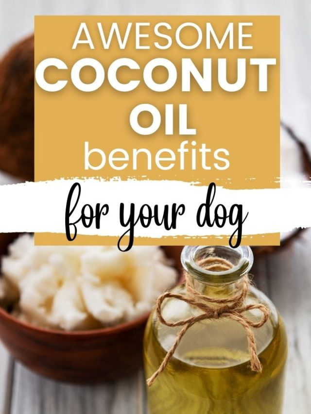 Great Benefits of Coconut Oil For Dogs