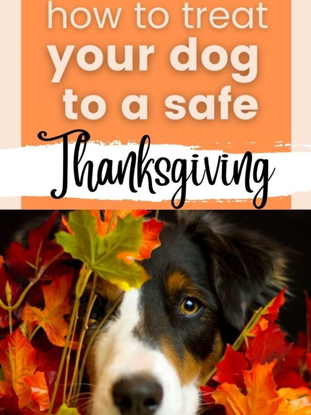 How to Treat Your Dog to A Happy Thanksgiving